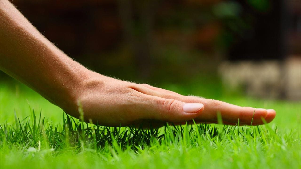 Person holding their hand inches above the grass in their lawn