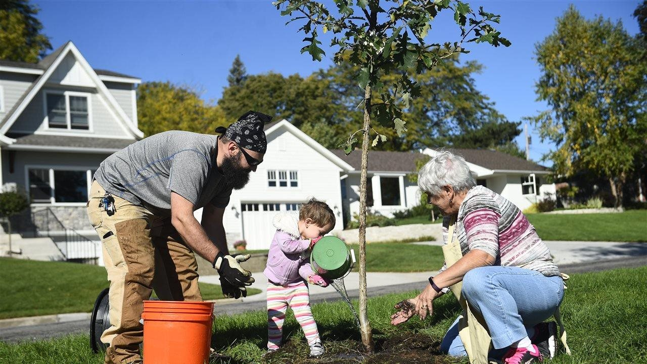 little girl, dad and grandmother planting tree for arbor day