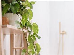 healthy plant on shelf in Bathroom