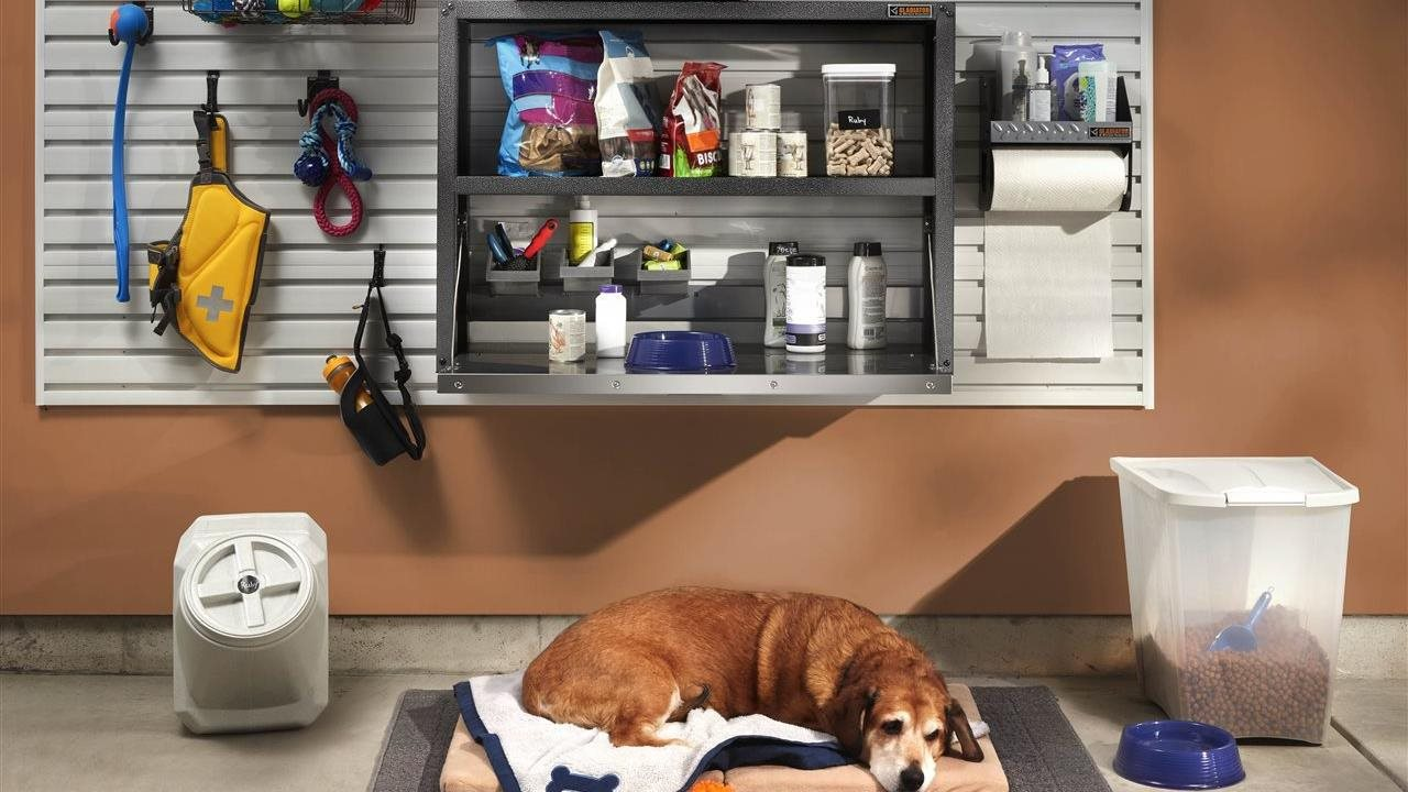 Cute dog in garage with storage on the wall