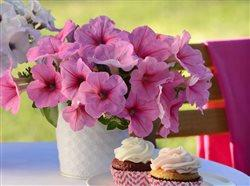 wave petunias in pots on a side table with cupcakes