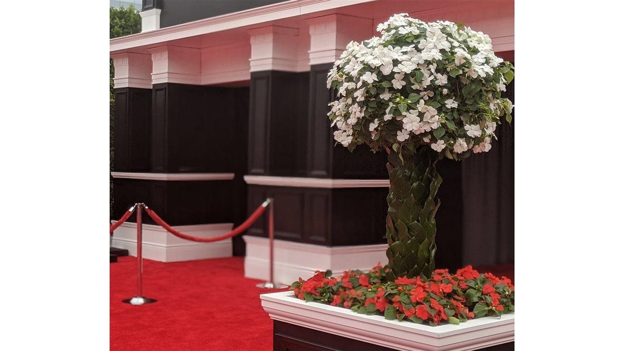 white and red beacon impatience planted in flower box and urn near red carpet