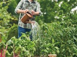 person using miricle grow on their garden