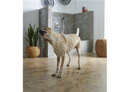 Wet dog shaking off water in room with beautiful flooring