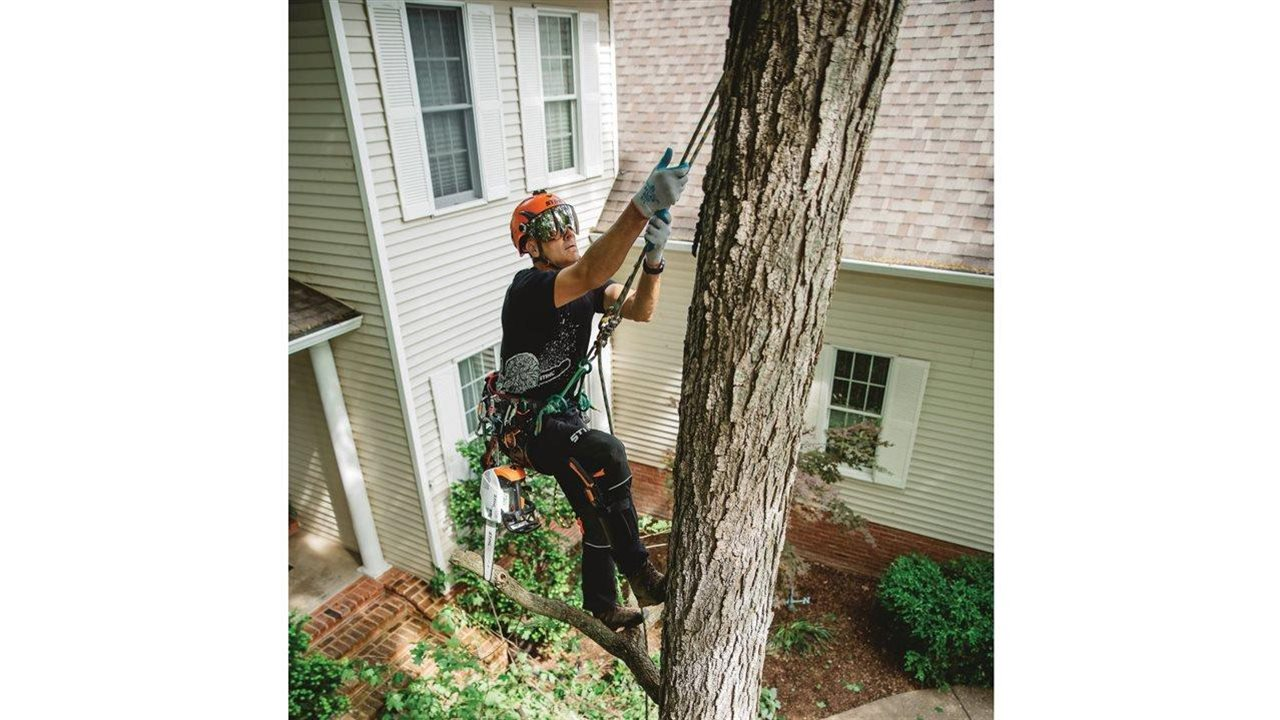 man in tree using tree trimmer