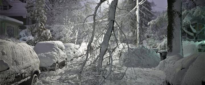 fallen tree limb in winter