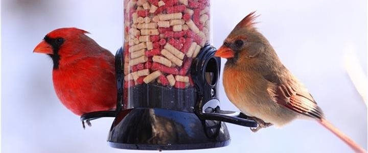 Feed backyard birds this season for the greater, global good