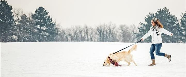 Tips for a happy, healthy holiday season with your dog