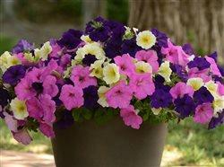 wave flowers in a pot