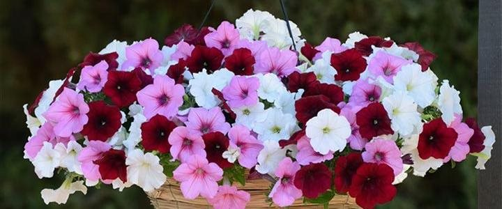flowers in a hanging basket