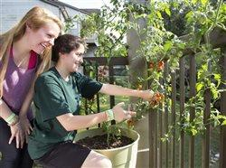 two girls pulling tomatoes off of a potted tomato plant