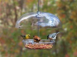 birds feedng at a feeder