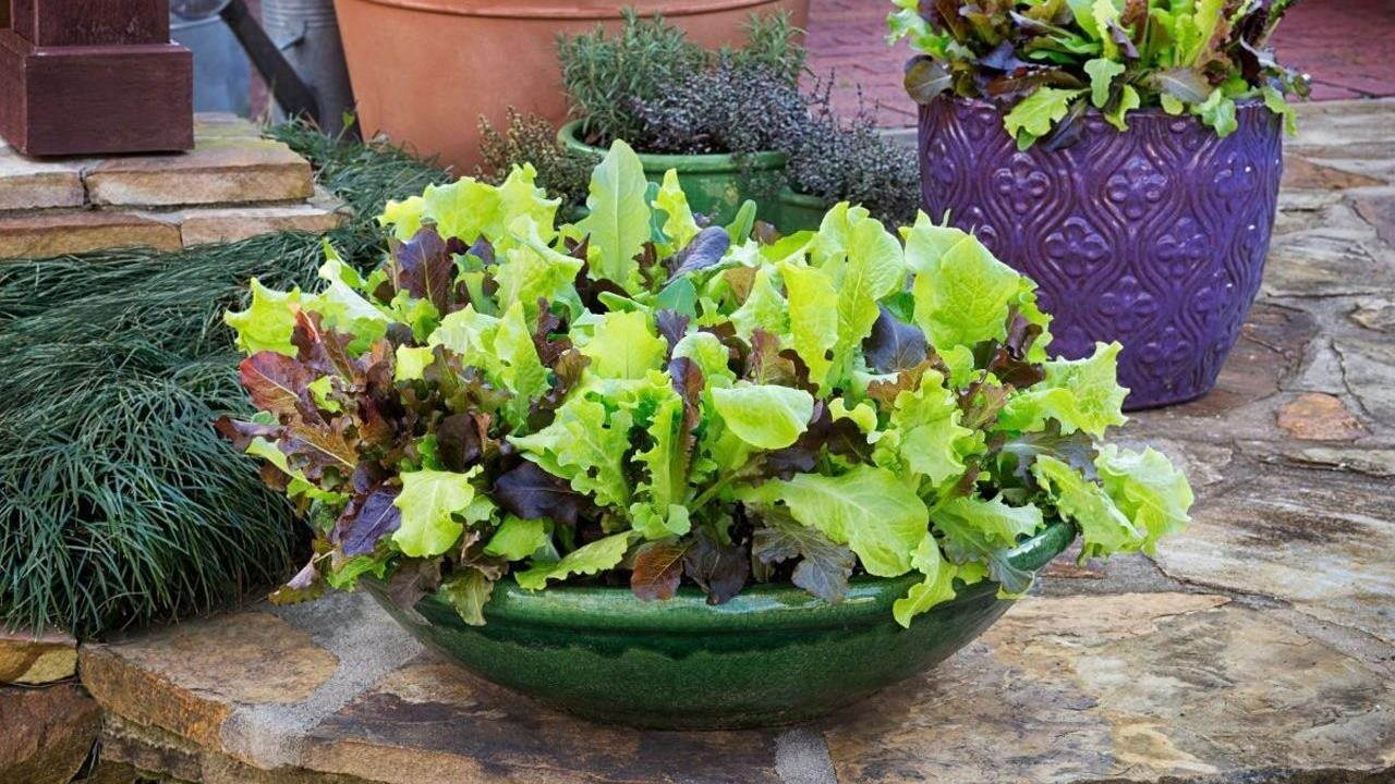 gourmet salad mix bowl planter