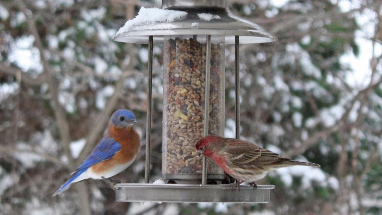 Two birds in winter eating off hanging bird feeder.
