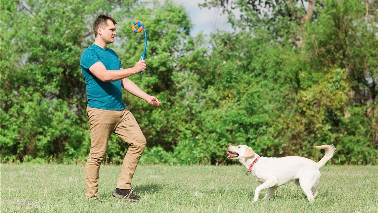 man play fetch with his dog in a park