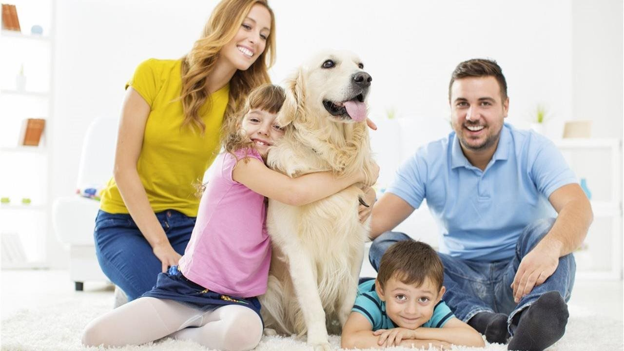 5 tips to solve separation anxiety in your pet