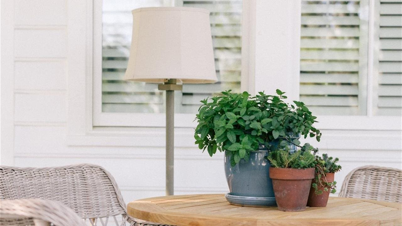 Plants on a table on a porch