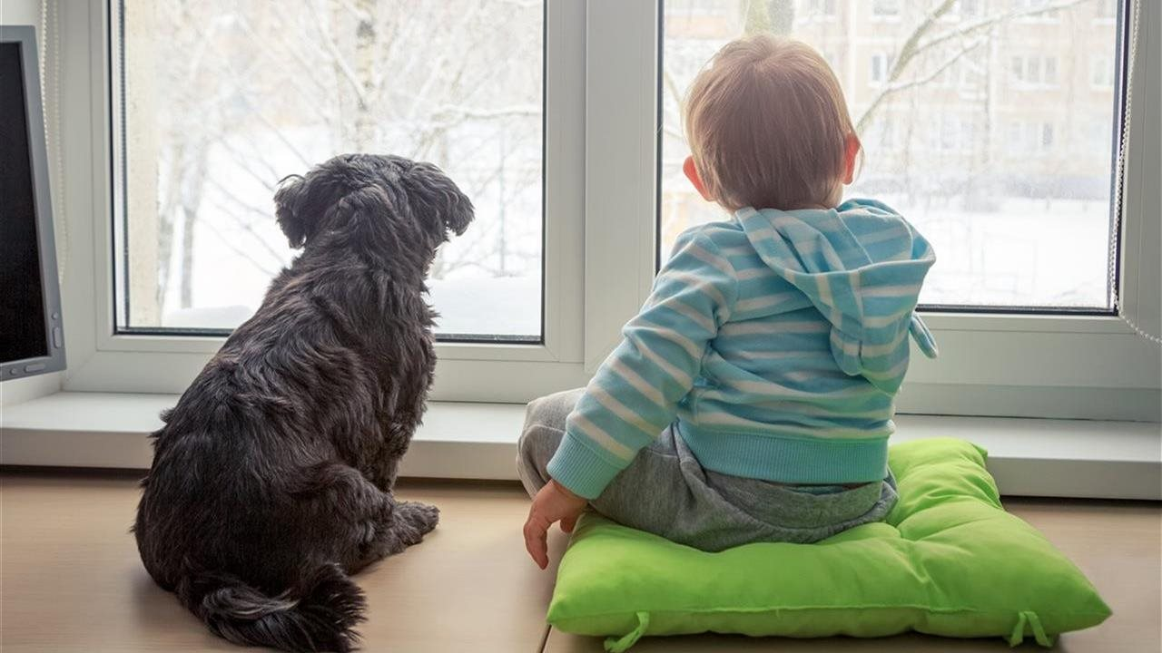 baby and dog looking out window in winter