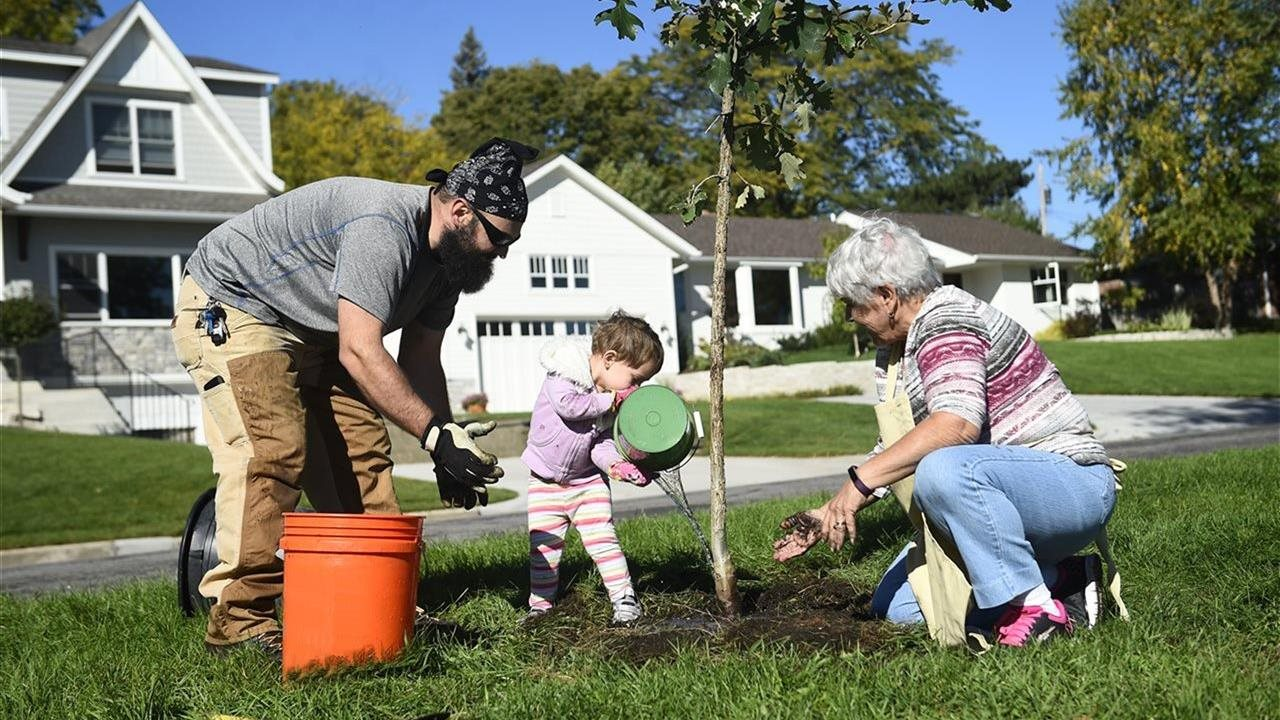 little girl father and grandmother planting a tree
