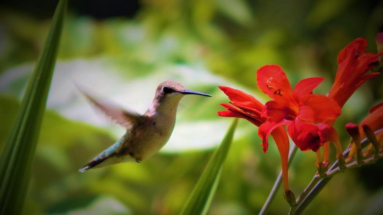 humming bird near read flower