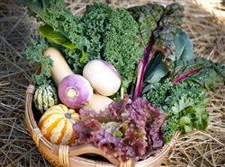 basket full of wonderfu garden vegetables
