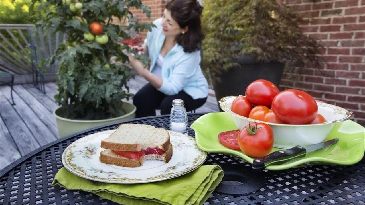 Bonnie tomato plant and gardener. Tomatoes and sandwich on table