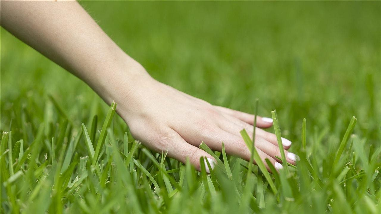 Hand feeling real grass
